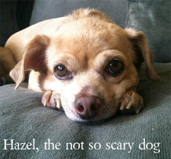 Hazel The not so scary dog